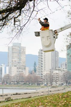 The Bidwell tree in Vancouver's West End gets the light treatment: City workers spend two to three days getting the tree ready for Christmas. More than lights are used to illuminate the tree, which is actually a cluster of seven Elm trees. Elm Tree, West End, Three Days, Vancouver, Trees, Lights, City, Frame, Christmas