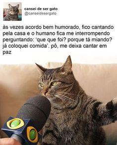 "17.8k Likes, 1,095 Comments - Cansei de ser gato (@canseidesergato) on Instagram: ""minha casa minhas regras #empoderamentofelino #canseidesergato"""