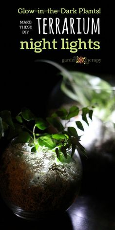 Make this unique glow in the dark terrarium with real plants to use as a night light