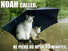 Noah called... #catoftheday