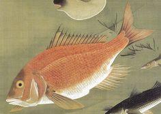 """伊藤若冲 Ito Jakuchu 群魚図《鯛》 Gungyo-zu""""Tai""""(Fish-Red Snapper)"""