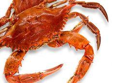 Blue crabs in Louisiana turn a beautiful orange-red when they are cooked.  Learn more about Louisiana crab, how to prepare them and get some killer recipes here!