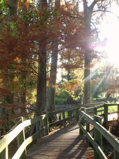 Sunlight streaming through the trees on the Boardwalk at Reelfoot Lake, TN.