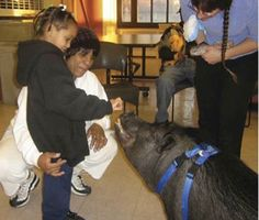 Potbellied Pigs: The New Therapy Animals  Repinned by Saebo, Inc. https://www.facebook.com/saeboinc