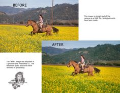 Before & after Lightroom/photoshop edit. This image was taken in a mustard seed field in Russian River area/Sonoma County. #somomacounty#horses#mustardseed#california