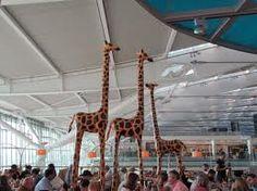 The Giraffes at Heathrow Airport, England