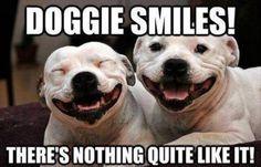 20+ Wonderful Funny Animal Photos: Ultimate Smiles Guaranteed