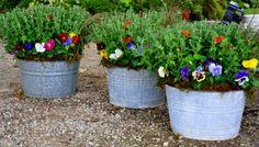 Pelly Farm - The Garden Patch