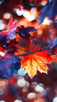 Lights of Autumn | From @GuessQuest collection