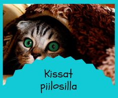 Puhe ja kieli Special Education, Teaching, Cats, Animals, Gatos, Animaux, Animales, Learning, Education