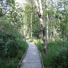 Rundweg durch unser Moor am Holzöstersee Sidewalk, Campsite, Landscape, Nature, Side Walkway, Walkway, Walkways, Pavement