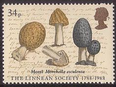 Bicentenary of Linnean Society. Archive Illustrations 34p Stamp (1988) Morchella esculenta (James Sowerby)