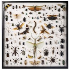 The Evolution Store, Soho, NYC - Museum Quality Insects Collection - Mixed Insects
