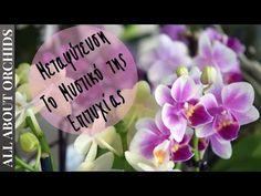 Orchids, Rose, Flowers, Youtube, Plants, Decor, Pink, Decoration, Plant