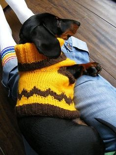 A Charlie Brown wiener! Love it! #Doxie #DoxieMom #CharlieBrownSweater