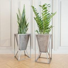 Sansevieria Zamiocúlcas Walk In Wardrobe Design, Delonix Regia, Thuja Occidentalis, Florence Art, Wall Lights, Ceiling Lights, Ficus, Plant Decor, Planter Pots