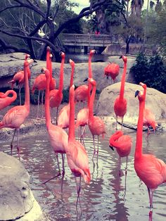 Flamingo Wallpaper, Watercolor Artists, Pink Flamingos, Beautiful Birds, Cute Wallpapers, Environment, Inspiration, Feature Wallpaper, Cutest Animals