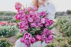Rosy Diamond a Blue Diamond jsou sestry. Blue Diamond má místo v našich tulipánových záhonech už od samého začátku a je to držák—jak ve váze, tak i na záhonu. Proto, když jsme zjistili, že má růžového sourozence, byla naše radost převeliká. Rosy má tmavší stonky a průsvitné okvětní plátky a když zestárne konce zesvětlají. Za nás jasná volba. Floral Wreath, Wreaths, Decor, Floral Crown, Decoration, Door Wreaths, Deco Mesh Wreaths, Decorating, Floral Arrangements