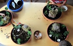 make your own fairy gardens....what a fun idea for girl's b'day parties!