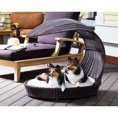 Perfect for any deck or poolside patio, this outdoor chaise lounger allows your dog to sit comfortably outside. A weatherproof 6-inch outdoor cushion and a waterproof poly rattan construction highlight this dog lounger.