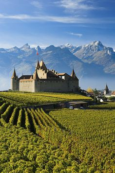 Vineyards And Castle Aigle, Vaud, Switzerland