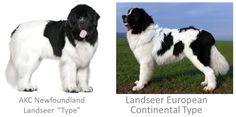 Landseer ECT vs. NEWFOUNDLAND