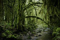 La Forêt d'émeraude, Baume-les-Messieurs, Franche-Comté, France