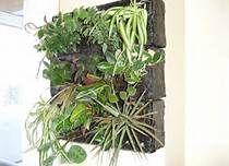 Diy Indoor vertical garden - Bing Images