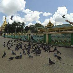 Bird feeding around Sule Pagoda in Yangon. Myanmar Travel, Yangon, Plan Your Trip, Travel Essentials, Journey, Bird, Country, Rural Area, Travel Necessities