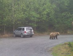 Have bear spray on hand. If you are RVing and hiking in other states, you may also need it there. Bears can be found from Florida to California.  Read up on how to react to a brown bear vs a grizzly bear.  Photo: Russian River Campground Bear