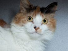 """Jada"" - Available for adoption at Pets Unlimited!"