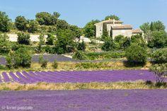 Lavande drôme drome lavender http://www.bien-etre-drome.com/