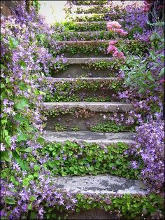mossy The Secret Garden, Secret Gardens, Garden Paths, Garden Landscaping, Garden Steps, Landscaping Ideas, Plantation, Dream Garden, Big Garden