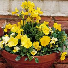Daffodils, Pansies & Violas | Spectacular Container Gardening Ideas - Southern Living