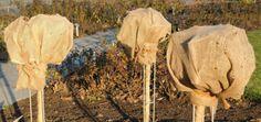 Winterharte Kübelpflanze. Welche Pflanzen können draußen überwintern?