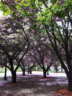 Boston blooms in June