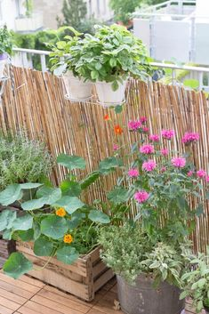 Porch And Balcony, Balcony Garden, Permaculture, Garden Maintenance, Balcony Design, Pixie Haircut, Decoration, Outdoor Living, Indoor
