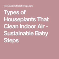 Types of Houseplants That Clean Indoor Air - Sustainable Baby Steps