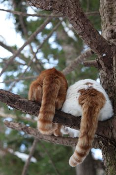 Kitty Tails