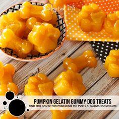 Pumpkin Dog Treats, Diy Pumpkin, Homemade Dog Treats, Healthy Dog Treats, Yummy Treats, Yummy Food, Doggie Treats, Hypoallergenic Dog Treats, Fiber Foods