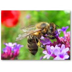 Honeybee on Verbena ATC Business Card Template