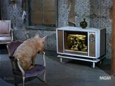 Arnold Ziffel from Green Acres enjoyed watching TV
