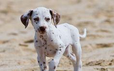 Portare i cani in spiaggia è bellissimo! Ma quali sono le accortezze da adottare quando andiamo al mare? Scopriamo assieme cosa non dobbiamo dimenticare!
