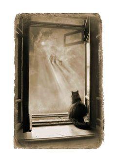 кот Бегемот, фото Елена Мартынюк
