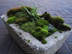 """Sometimes the simplest of gardens spark curiosity and pleasure alike."" It's all in the details.     #zen #garden #hardscape #landscape"