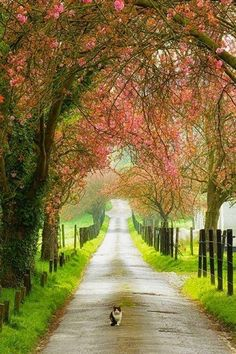 Beautiful English country lane with cat!