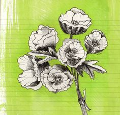 Flower sketch | Flickr - Photo Sharing!