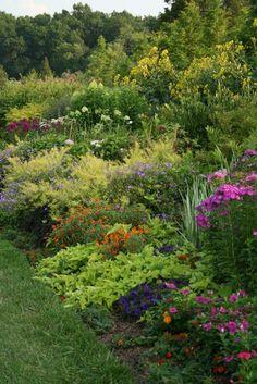 perennial plants - Google Search