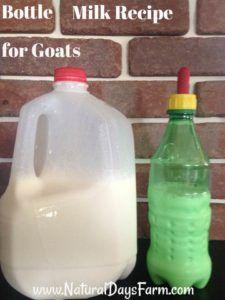 Bottle Milk Recipe for Goats  bottle babies, goats, kids, Nigerian Dwarfs, kidding, milk replacers