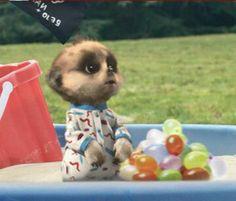 Baby Oleg makes a splash
